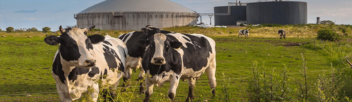 CHP Solution For Biogas Farm